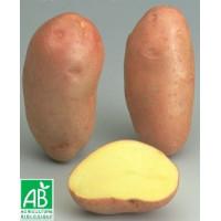 Pomme de terre Rosabelle BIO
