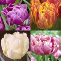 Assortiment de tulipes doubles hâtives