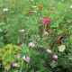"""Prairie fleurie """"Papillon"""""""