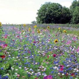"""Prairie fleurie """"Miellée Annuelle"""""""