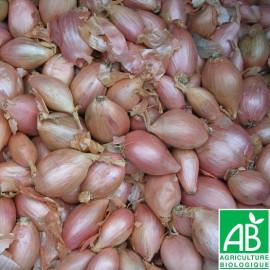 Echalote cuisse de poulet Longor Bio