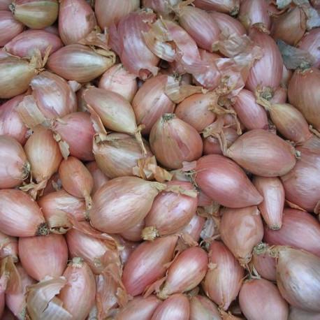 Echalote cuisse de poulet Jermor