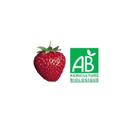 Plant de fraisier Bio NovaGento