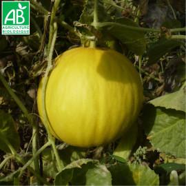 Melon Boule d'Or Bio