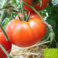 Tomate Merveille des Marchés Bio