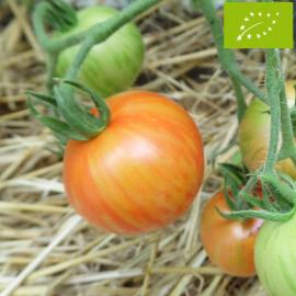 Tomate Tigerella Bio