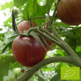 Tomate Black Cherry Bio