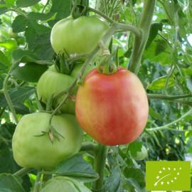 Tomate Pêche Bio