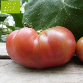 Tomate Ananas Noire Bio