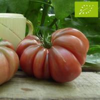 Tomate Purple Calabash Bio