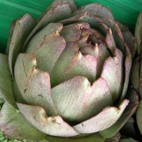 Artichaut Violet de Provence