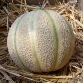 Melon Gandalf F1