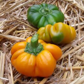 Poivron Mandarine Bio