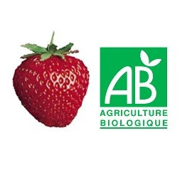 Plant de fraisier Bio Nova Gento (racines nues)