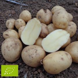 Pomme de terre Alienor ® BIO