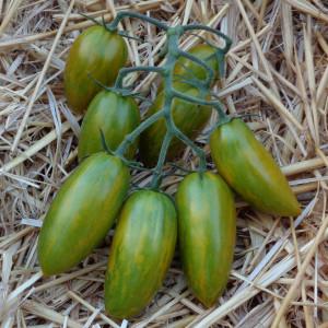 Tomate ARTISAN™ Green Tiger
