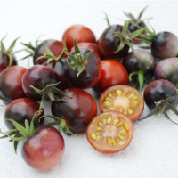 Tomate INDIGO™ Blue Berries