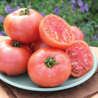 Tomate Pink Pounder F1