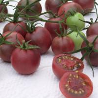 Tomate Chocolate Cherry