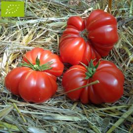 Tomate Costoluto Genovese Bio