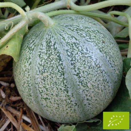 Melon Griselet F1 Bio