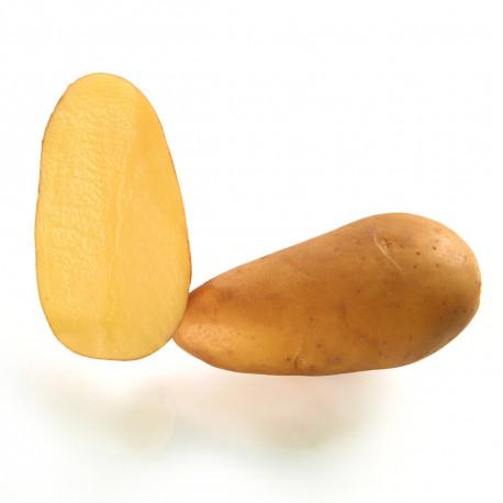 Pomme de terre Angélique