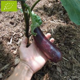 Aubergine Longue Violette Bio