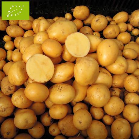Pomme de terre Penni BIO