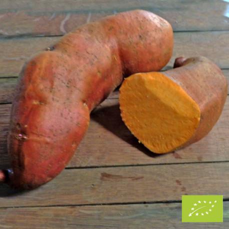 ORANGE ALLONGEE BIO - Patate Douce en godet pré-poussé
