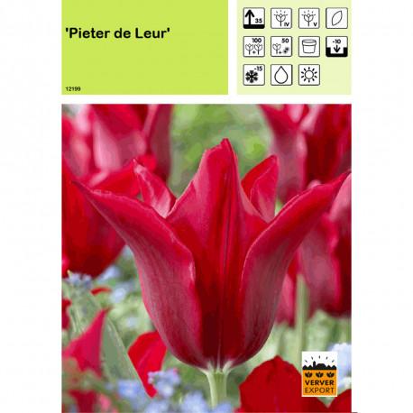 Tulipe Pieter de Leur