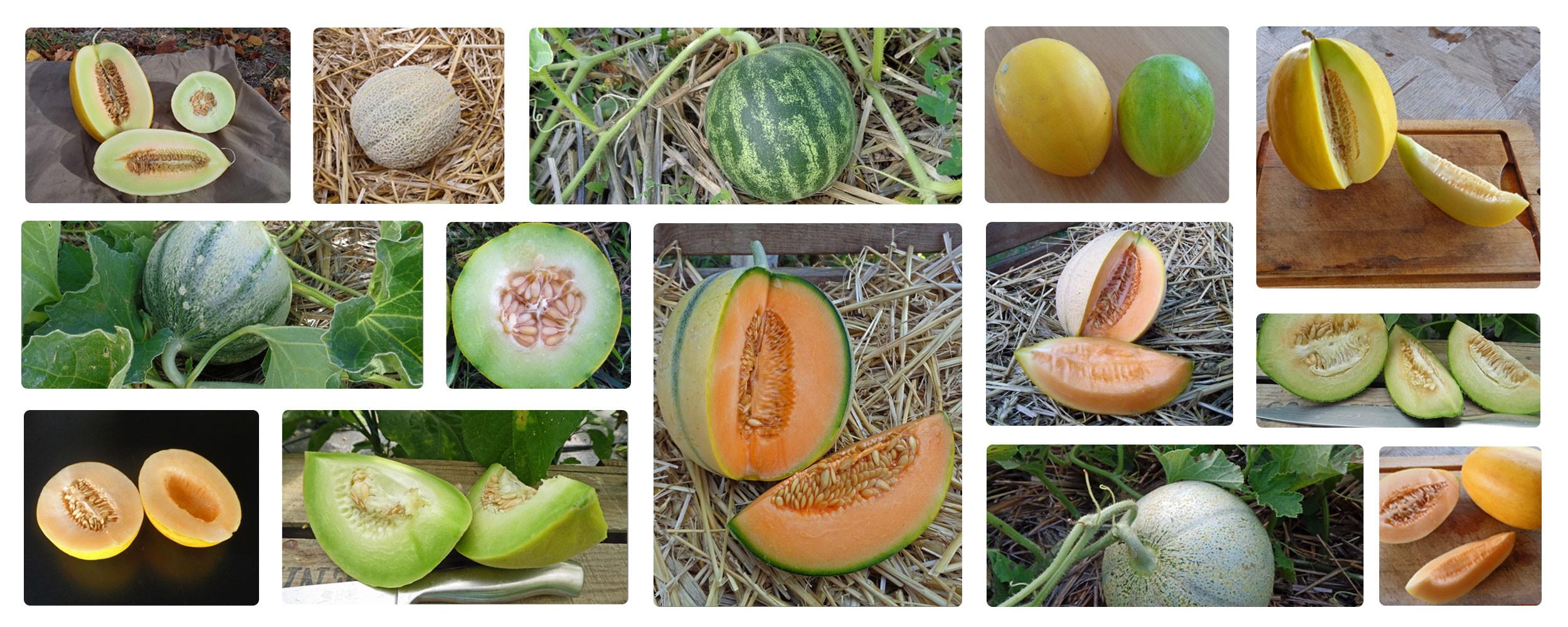Des nouveautés à essayer sur la gamme Melons/Pastèques